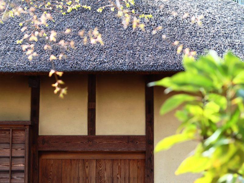 桜咲く、お花見散策2020